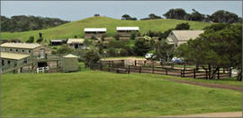 Ace Hi Riding Ranch - Newcastle Accommodation