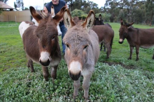 Donkey Tales Farm Cottages - Newcastle Accommodation