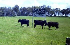 Cluan Homestead - Newcastle Accommodation