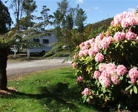 Zeehan Bush Camp  and Caravan Park - Newcastle Accommodation