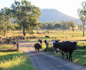 Tommerups Dairy Farmstay - Newcastle Accommodation