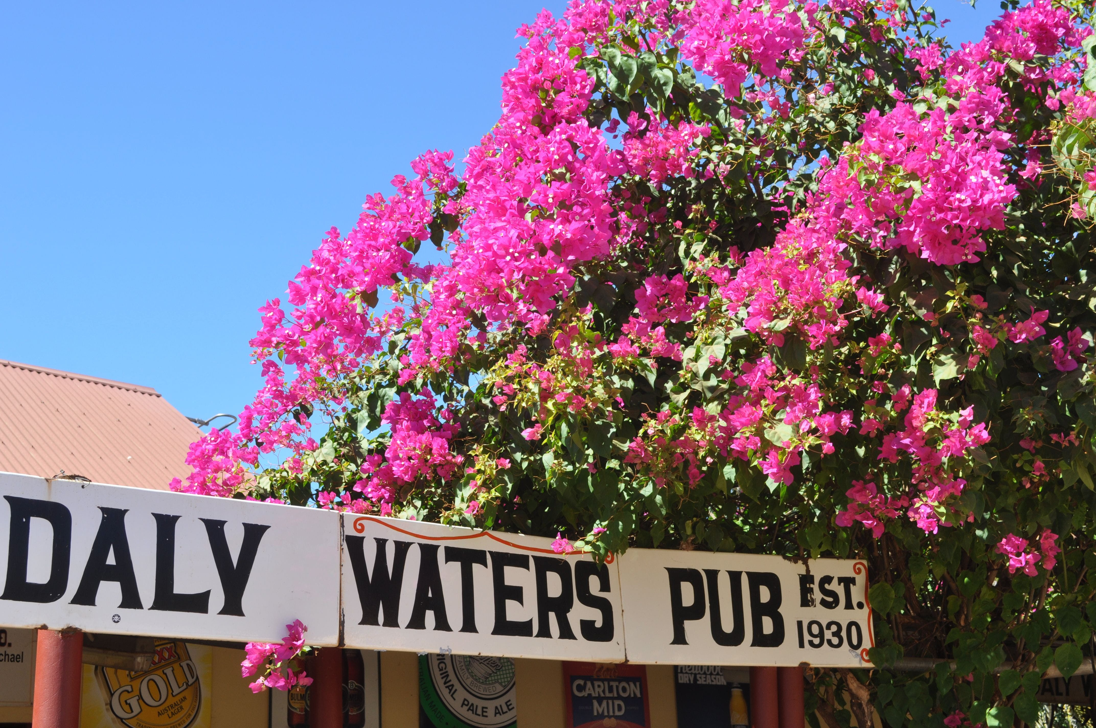 Daly Waters Historic Pub - Newcastle Accommodation