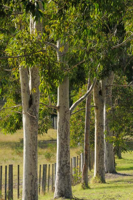 Stringybark Cottages - Newcastle Accommodation