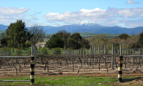 Buller View Wines - Newcastle Accommodation