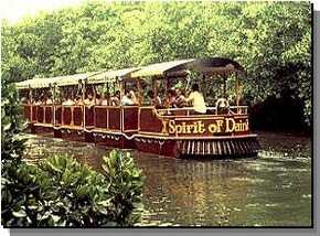 Daintree Rainforest River Trains - Newcastle Accommodation