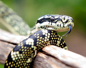 Reptile Encounters - Newcastle Accommodation