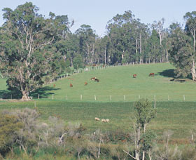Scenic Drives - Bunbury Collie Donnybrook - Newcastle Accommodation