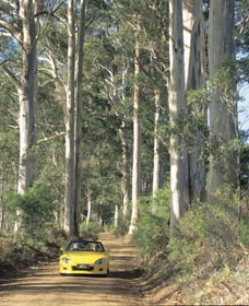 Mount Shadforth Scenic Drive - Newcastle Accommodation
