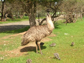Minlaton Fauna Park - Newcastle Accommodation