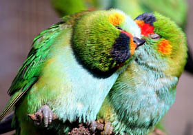 Rainbow Jungle - The Australian Parrot Breeding Centre - Newcastle Accommodation