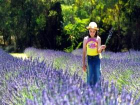 Brayfield Park Lavender Farm - Newcastle Accommodation