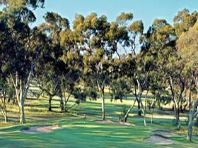 Tanunda Pines Golf Club - Newcastle Accommodation