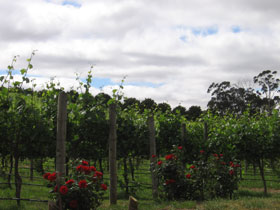 Manyara Vineyard - Newcastle Accommodation