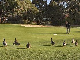 Royal Hobart Golf Club - Newcastle Accommodation