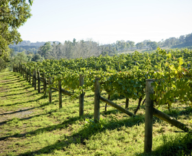 Surveyor's Hill Vineyards - Newcastle Accommodation