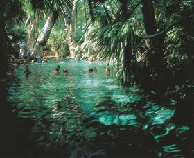 Mataranka Thermal Pool - Newcastle Accommodation
