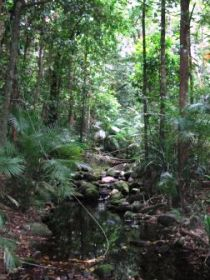 Mossman Gorge Rainforest Circuit Track Daintree National Park - Newcastle Accommodation