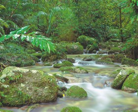 Mossman Gorge Daintree National Park - Newcastle Accommodation