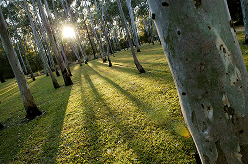 Tondoon Botanic Gardens - Newcastle Accommodation