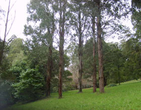 Mount Dandenong Arboretum - Newcastle Accommodation