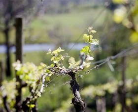 Norton Estate Wines - Newcastle Accommodation
