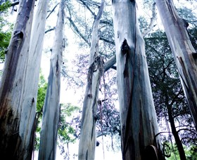Dandenong Ranges National Park - Newcastle Accommodation