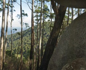 Gulaga National Park - Newcastle Accommodation