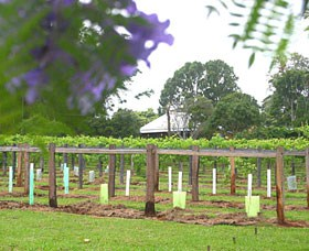 Douglas Vale Historic Homestead  Vineyard - Newcastle Accommodation