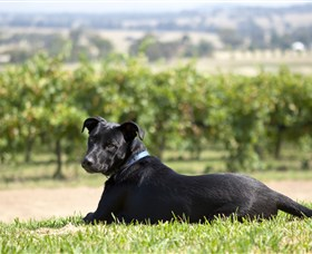 Moothi Estate Vineyard and Cellar Door - Newcastle Accommodation