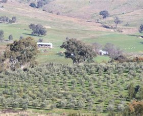 Wymah Organic Olives and Lambs - Newcastle Accommodation