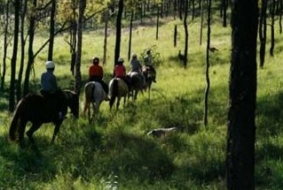 Hunter Valley Horse Riding and Adventures - Newcastle Accommodation