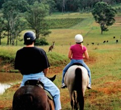Hunter Valley Horse Riding and Adventures