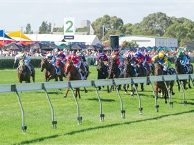 Morphettville Racecourse - Newcastle Accommodation