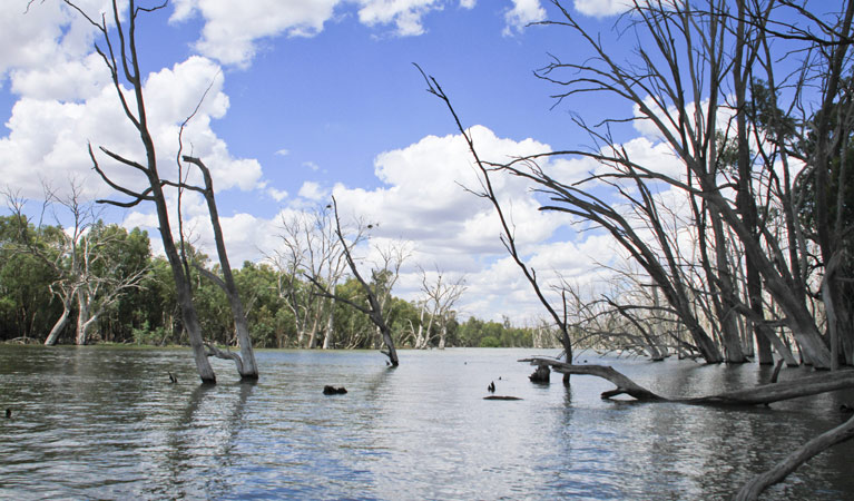 Murrumbidgee Valley National Park - Newcastle Accommodation