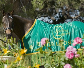 Living Legends The International Home of Rest for Champion Horses - Newcastle Accommodation