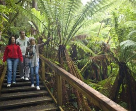 Otway Fly Treetop Adventures - Newcastle Accommodation
