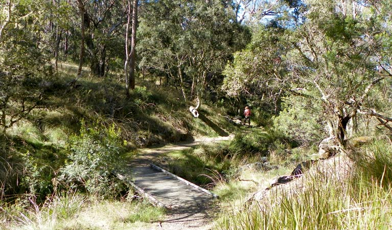Wollomombi walking track - Newcastle Accommodation