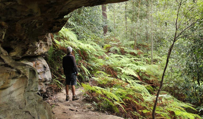 Dharug National Park - Newcastle Accommodation