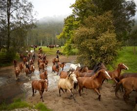 Glenworth Valley Horse Riding - Newcastle Accommodation