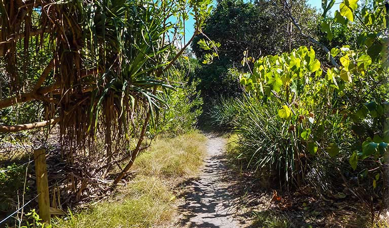 North Head walking track - Newcastle Accommodation