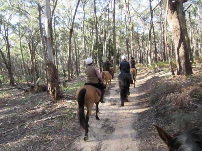 Silver Brumby Trails - Newcastle Accommodation
