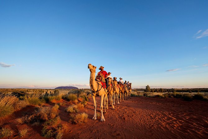 Uluru Camel Express Sunrise or Sunset Tours - Newcastle Accommodation