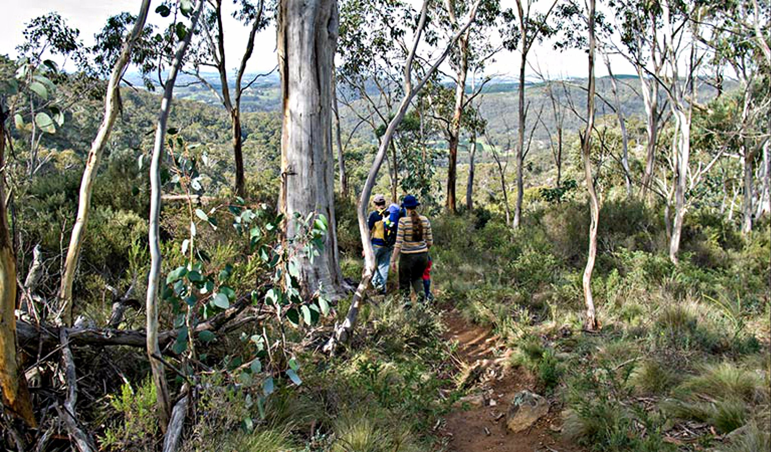 Summits Walking Track - Newcastle Accommodation