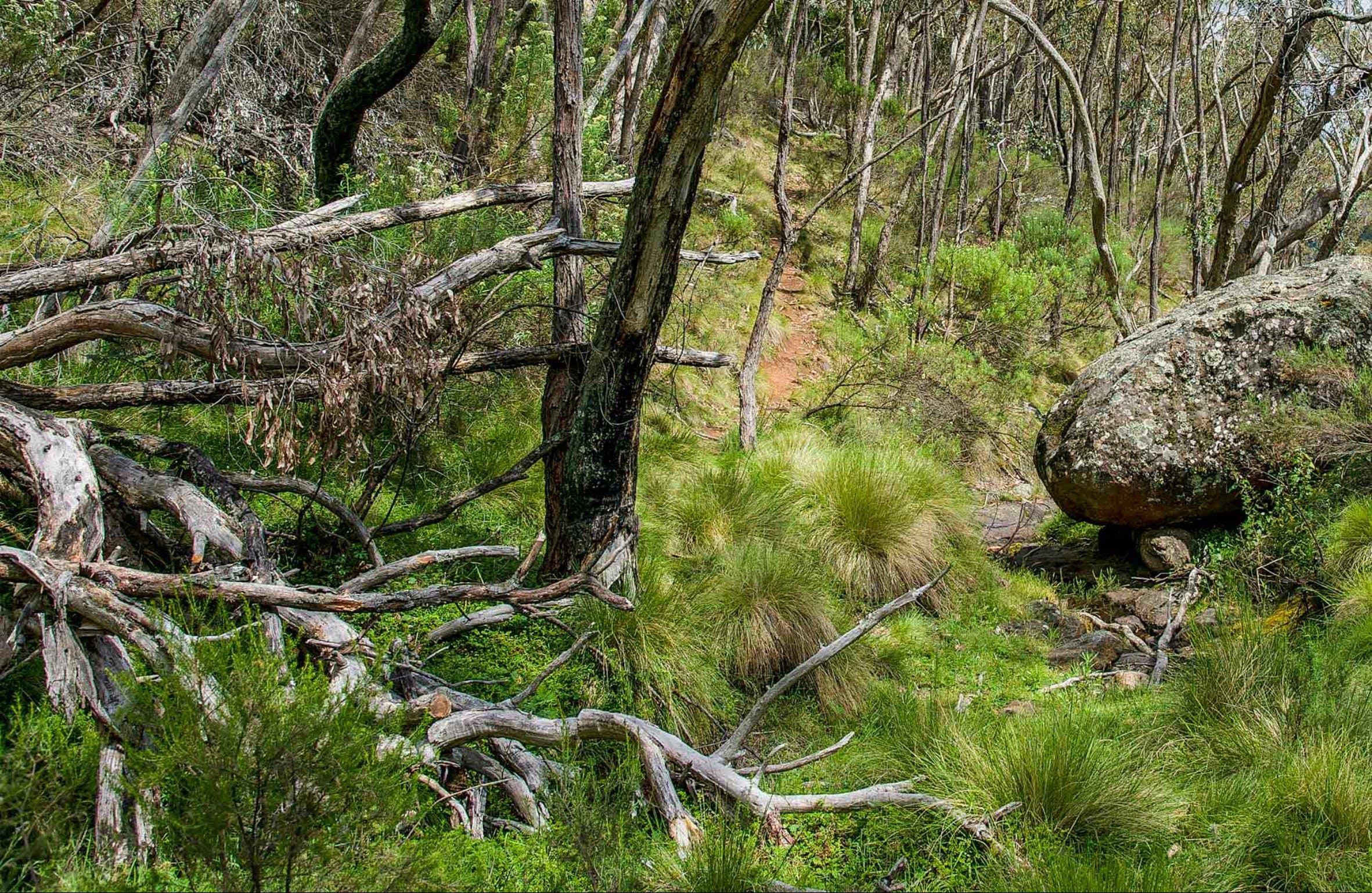 Hopetoun Falls Walking Track - Newcastle Accommodation
