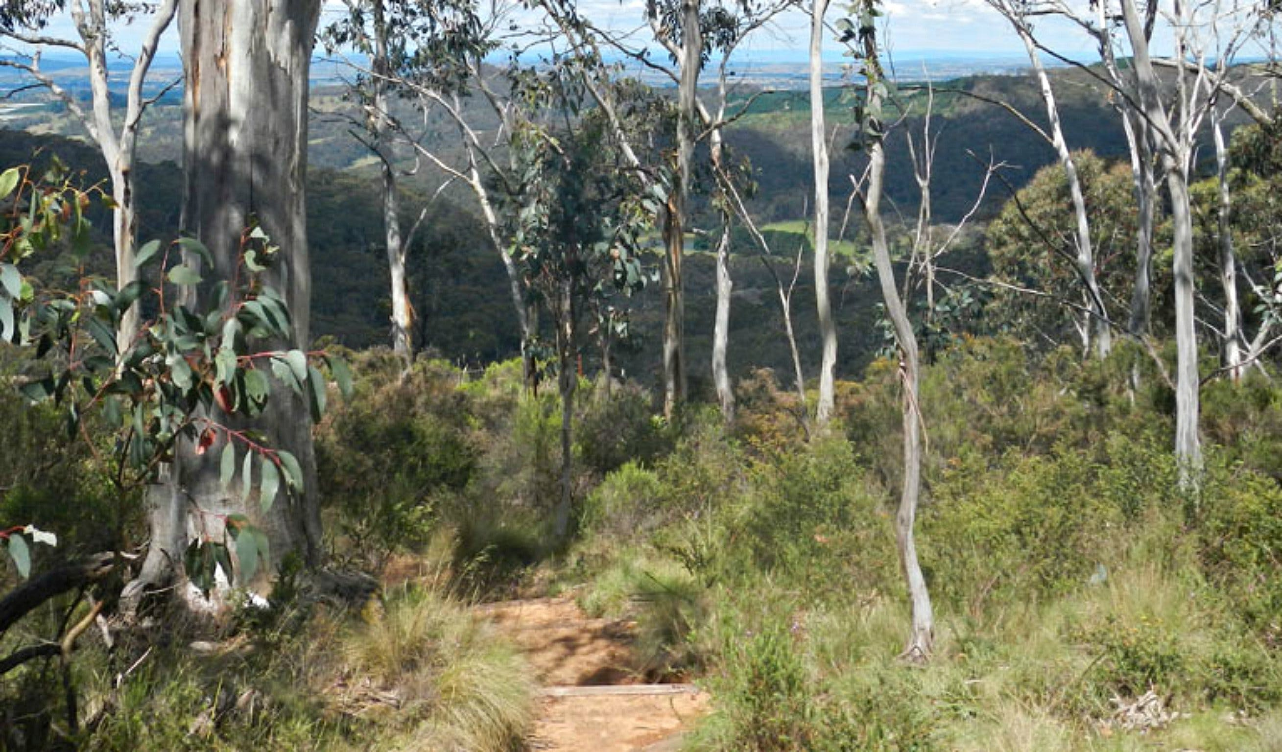 Mount Towac Walk - Newcastle Accommodation