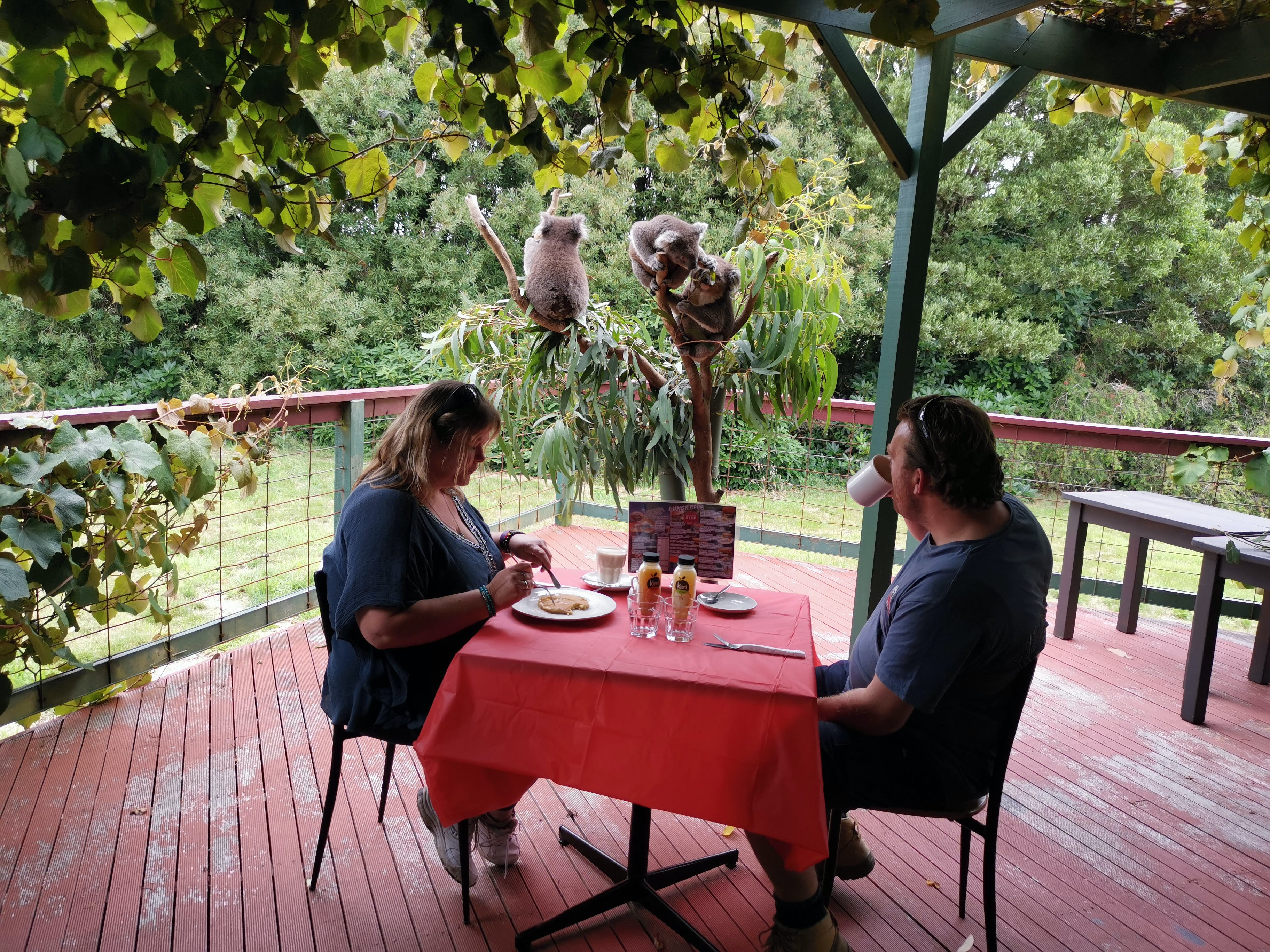 The Aussie Stop offering Breakfast with Koalas - Newcastle Accommodation