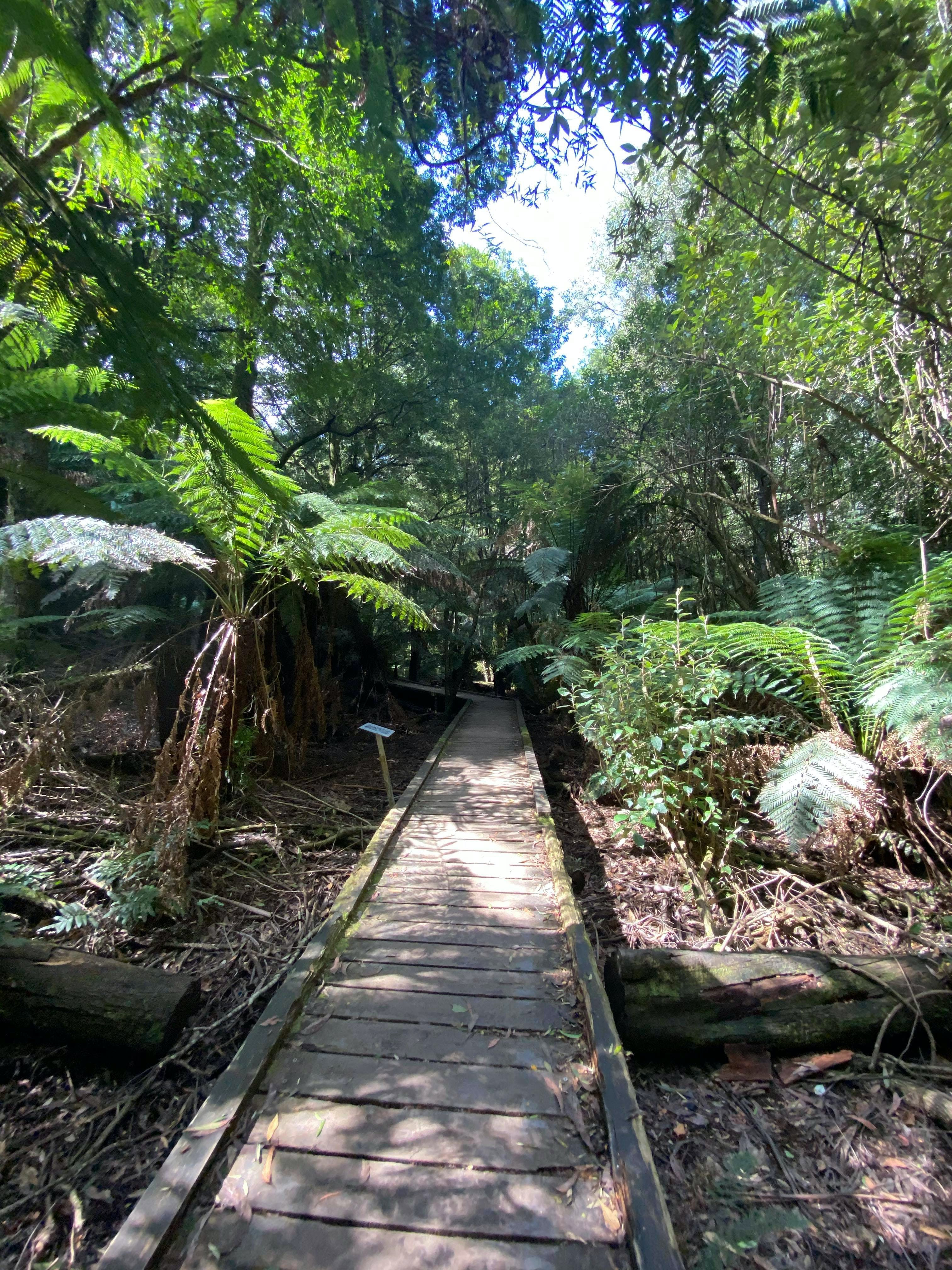 Wirrawilla Rainforest Walk - Newcastle Accommodation