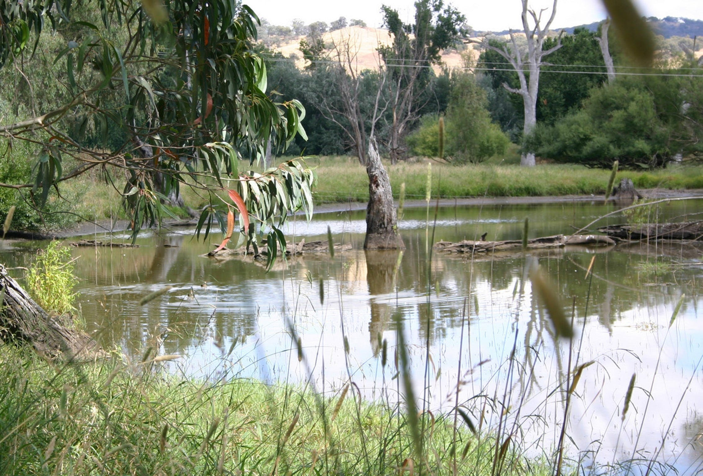 Tumut Wetlands - Newcastle Accommodation