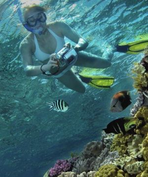 Calypso Reef Charters - Newcastle Accommodation