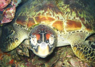 Adrenalin Snorkel and Dive - Newcastle Accommodation